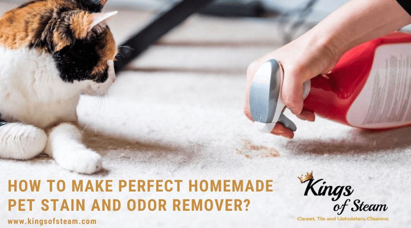 Diy Pet Stain And Odor Remover Kings Of Steam Castle Rock